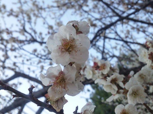 春は確実に♪